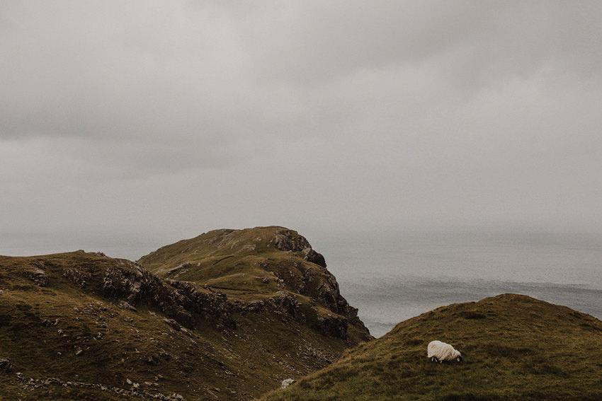 Sheeps around the slieve league cliffs